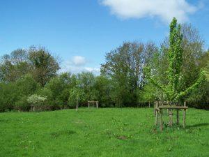 Davies Meadow