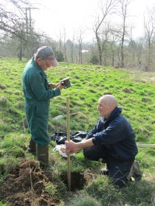 Tree Planting at Dormington