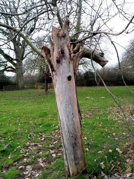 woodpecker hole the sturts